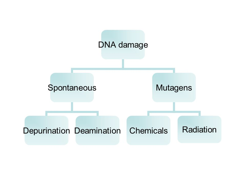 DNA damage Spontaneous DepurinationDeamination Mutagens ChemicalsRadiation