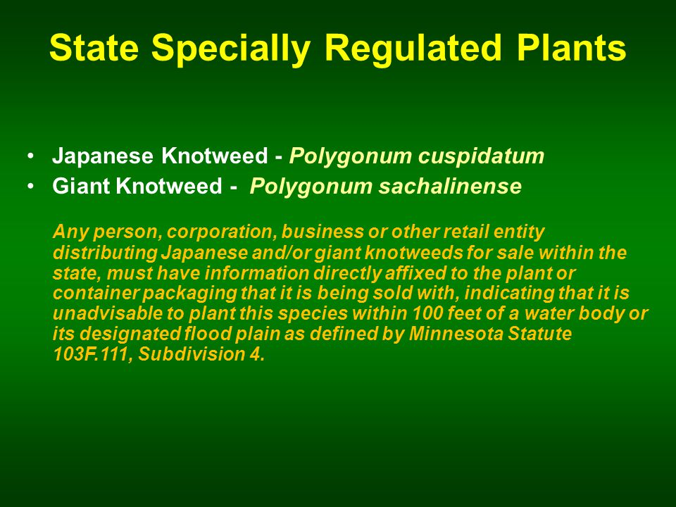 State Specially Regulated Plants Japanese Knotweed - Polygonum cuspidatum Giant Knotweed - Polygonum sachalinense Any person, corporation, business or other retail entity distributing Japanese and/or giant knotweeds for sale within the state, must have information directly affixed to the plant or container packaging that it is being sold with, indicating that it is unadvisable to plant this species within 100 feet of a water body or its designated flood plain as defined by Minnesota Statute 103F.111, Subdivision 4.