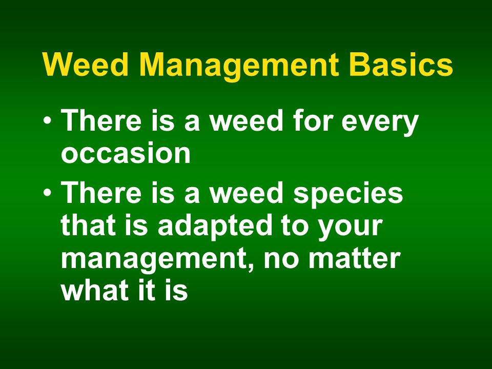 Weed Management Basics There is a weed for every occasion There is a weed species that is adapted to your management, no matter what it is