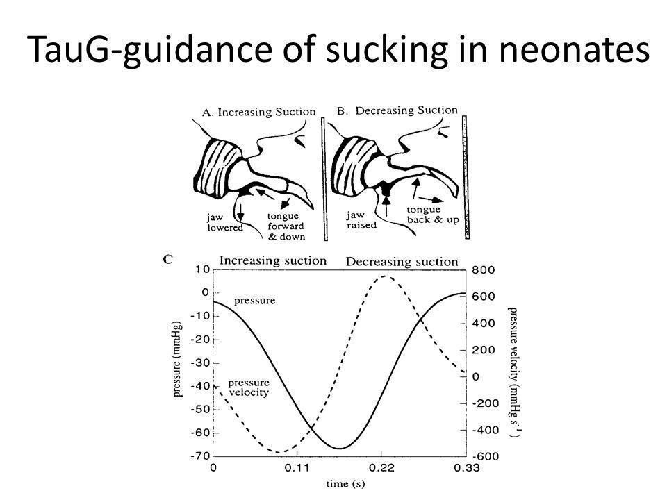 TauG-guidance of sucking in neonates