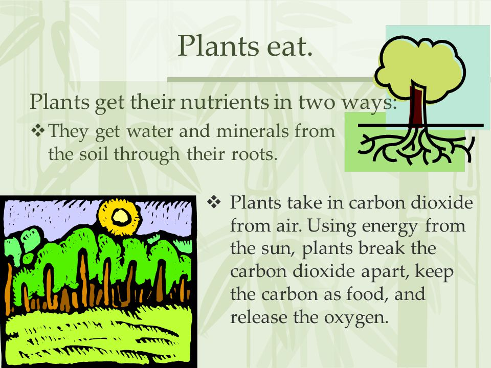 Plants eat.