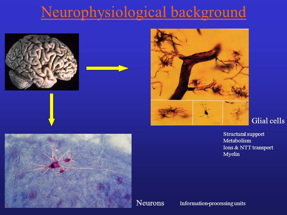 Grey matter cell bodies & dendrites White matter axones (myeline) Cortex & basal ganglia