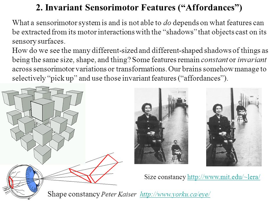 """What a sensorimotor system is and is not able to do depends on what features can be extracted from its motor interactions with the """"shadows"""" that obje"""