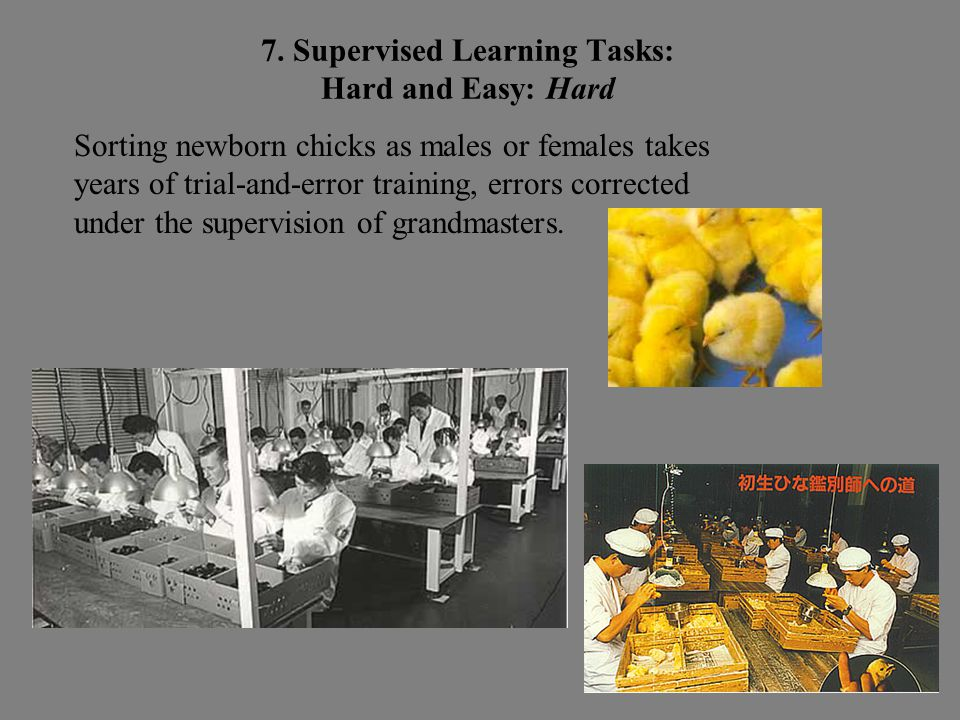 Sorting newborn chicks as males or females takes years of trial-and-error training, errors corrected under the supervision of grandmasters.