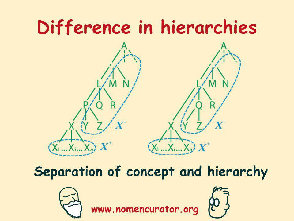 www.nomencurator.org Difference in hierarchies Separation of concept and hierarchy