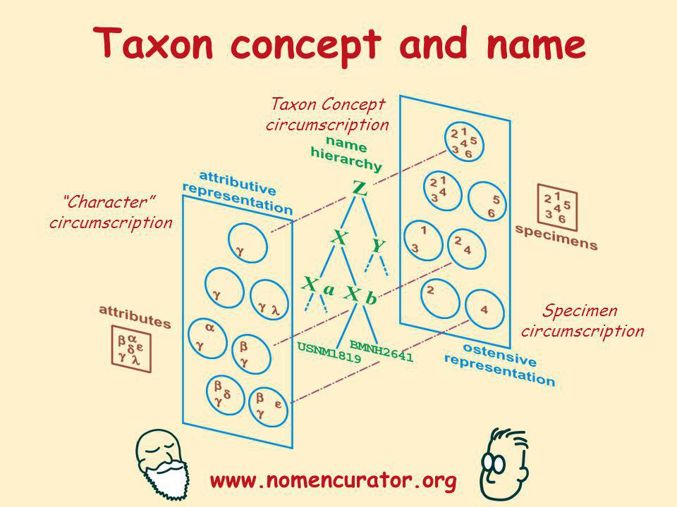 www.nomencurator.org Taxon concept and name Specimen circumscription Character circumscription Taxon Concept circumscription