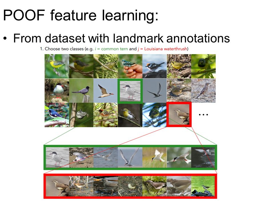 POOF feature learning: From dataset with landmark annotations
