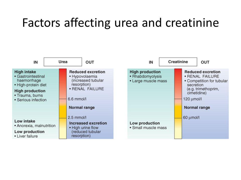 Factors affecting urea and creatinine