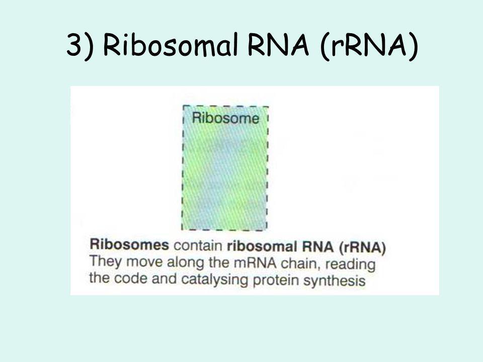 3) Ribosomal RNA (rRNA)