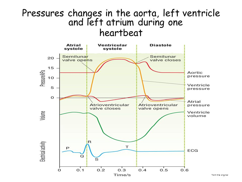 Pressures changes in the aorta, left ventricle and left atrium during one heartbeat © Pearson Education Ltd 2008 This document may have been altered f