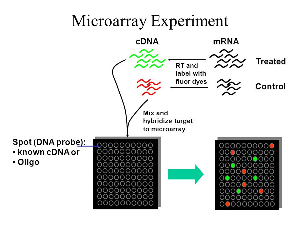 Microarray Experiment Control Treated mRNA RT and label with fluor dyes cDNA Spot (DNA probe): known cDNA or Oligo Mix and hybridize target to microar