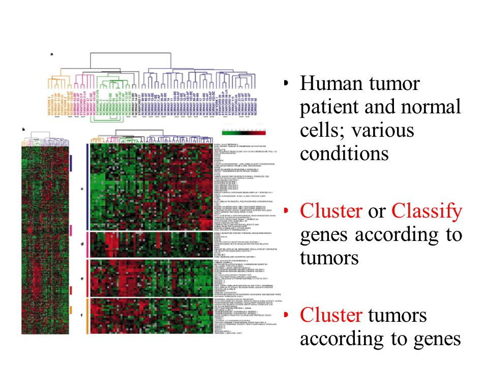 Human tumor patient and normal cells; various conditions Cluster or Classify genes according to tumors Cluster tumors according to genes