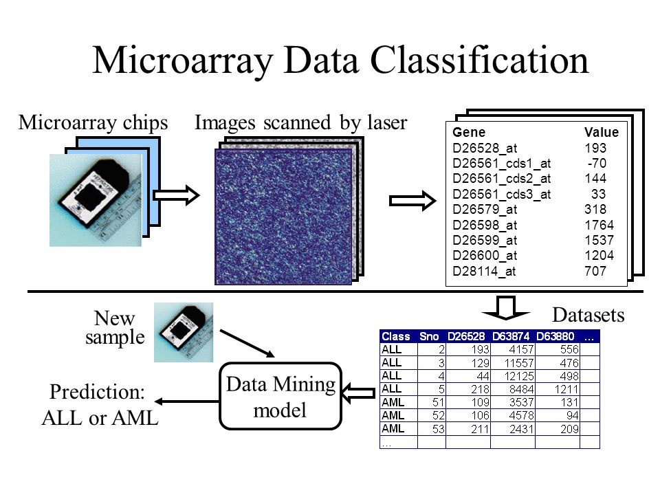 Microarray Data Classification Prediction: ALL or AML Gene Value D26528_at 193 D26561_cds1_at -70 D26561_cds2_at 144 D26561_cds3_at 33 D26579_at 318 D26598_at 1764 D26599_at 1537 D26600_at 1204 D28114_at 707 Data Mining model New sample Microarray chipsImages scanned by laser Datasets