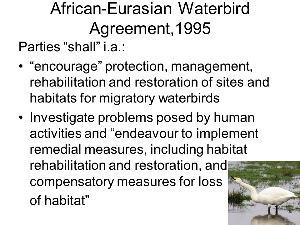 African-Eurasian Waterbird Agreement,1995 Parties shall i.a.: encourage protection, management, rehabilitation and restoration of sites and habitats for migratory waterbirds Investigate problems posed by human activities and endeavour to implement remedial measures, including habitat rehabilitation and restoration, and compensatory measures for loss of habitat