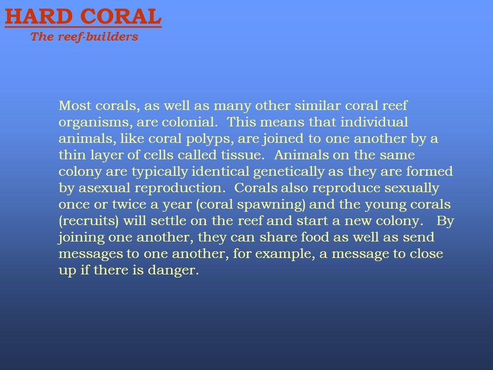 Most corals, as well as many other similar coral reef organisms, are colonial. This means that individual animals, like coral polyps, are joined to on