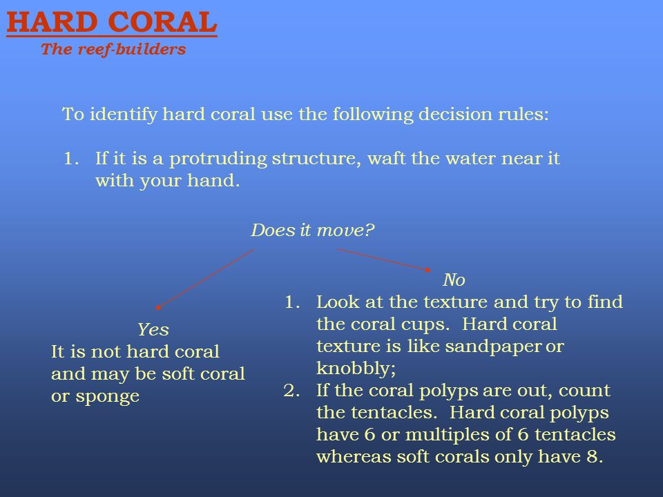 To identify hard coral use the following decision rules: 1.If it is a protruding structure, waft the water near it with your hand. Does it move? Yes I