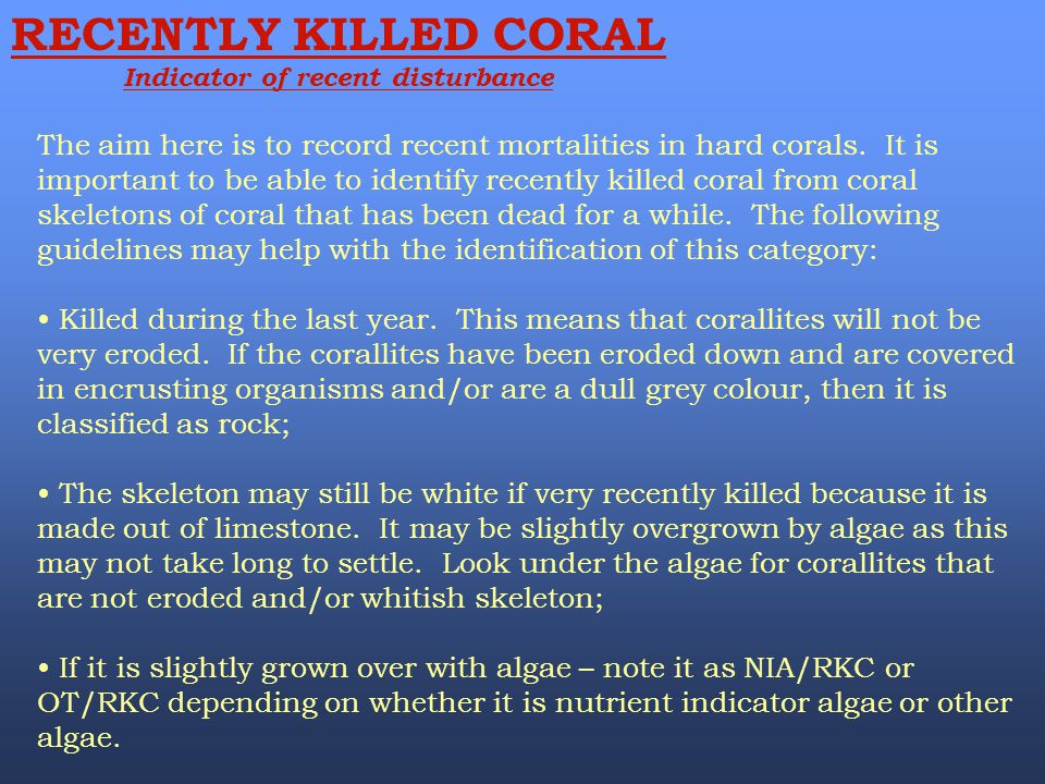 RECENTLY KILLED CORAL Indicator of recent disturbance The aim here is to record recent mortalities in hard corals. It is important to be able to ident