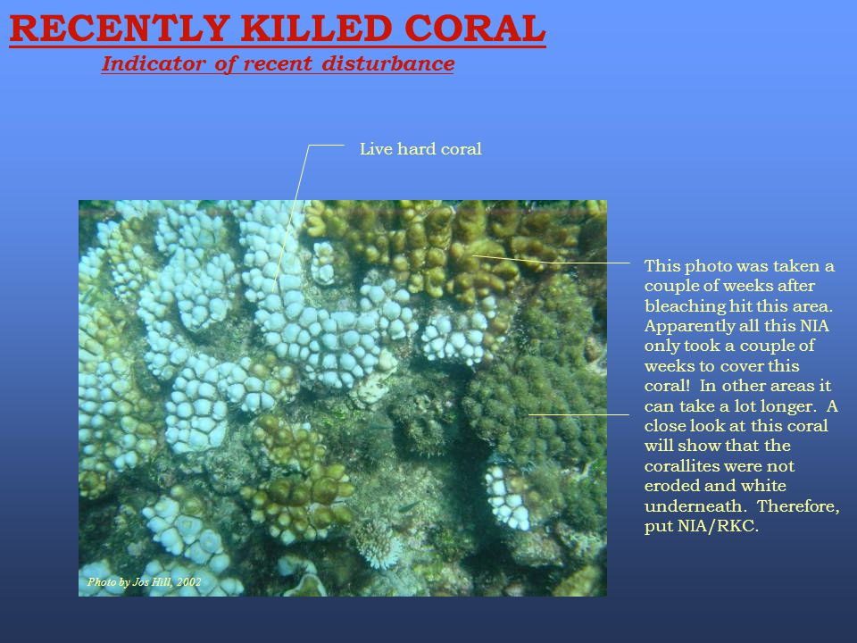 Photo by Jos Hill, 2002 RECENTLY KILLED CORAL Indicator of recent disturbance Live hard coral This photo was taken a couple of weeks after bleaching h