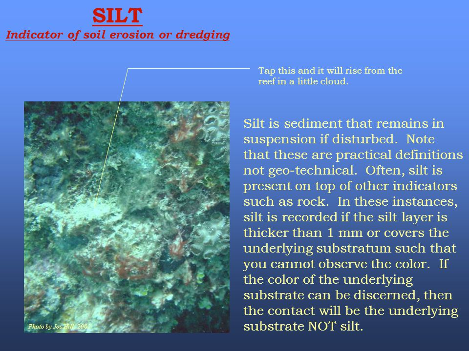 Photo by Jos Hill, 2002 SILT Indicator of soil erosion or dredging Tap this and it will rise from the reef in a little cloud. Silt is sediment that re