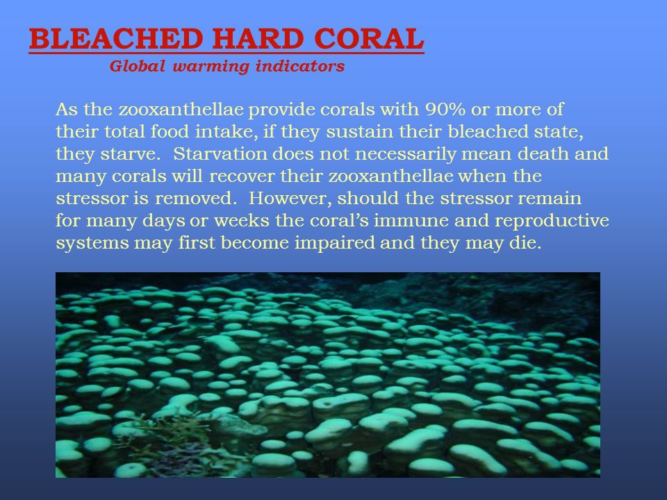 As the zooxanthellae provide corals with 90% or more of their total food intake, if they sustain their bleached state, they starve. Starvation does no