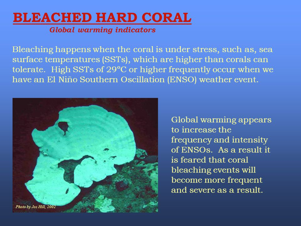 Photo by Jos Hill, 2002 Global warming appears to increase the frequency and intensity of ENSOs. As a result it is feared that coral bleaching events