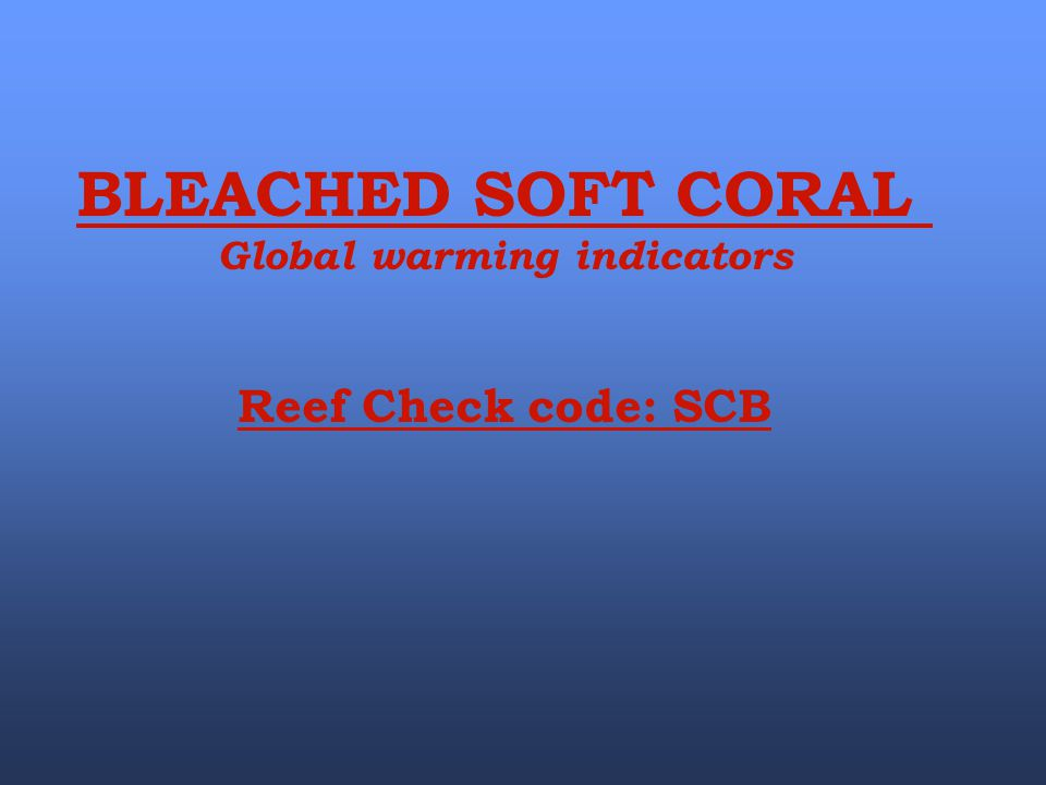 BLEACHED SOFT CORAL Global warming indicators Reef Check code: SCB