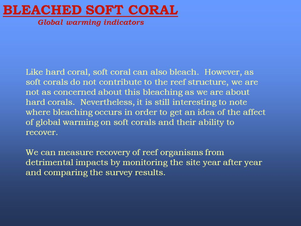 BLEACHED SOFT CORAL Global warming indicators Like hard coral, soft coral can also bleach. However, as soft corals do not contribute to the reef struc