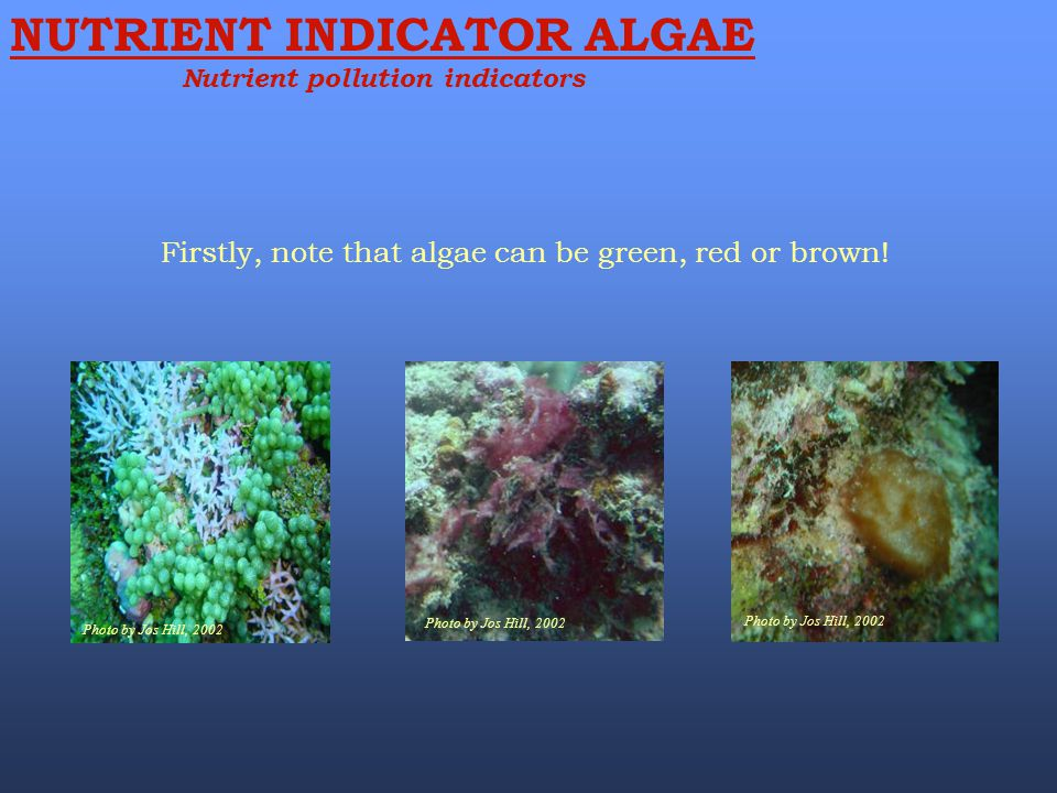 Firstly, note that algae can be green, red or brown! NUTRIENT INDICATOR ALGAE Nutrient pollution indicators Photo by Jos Hill, 2002