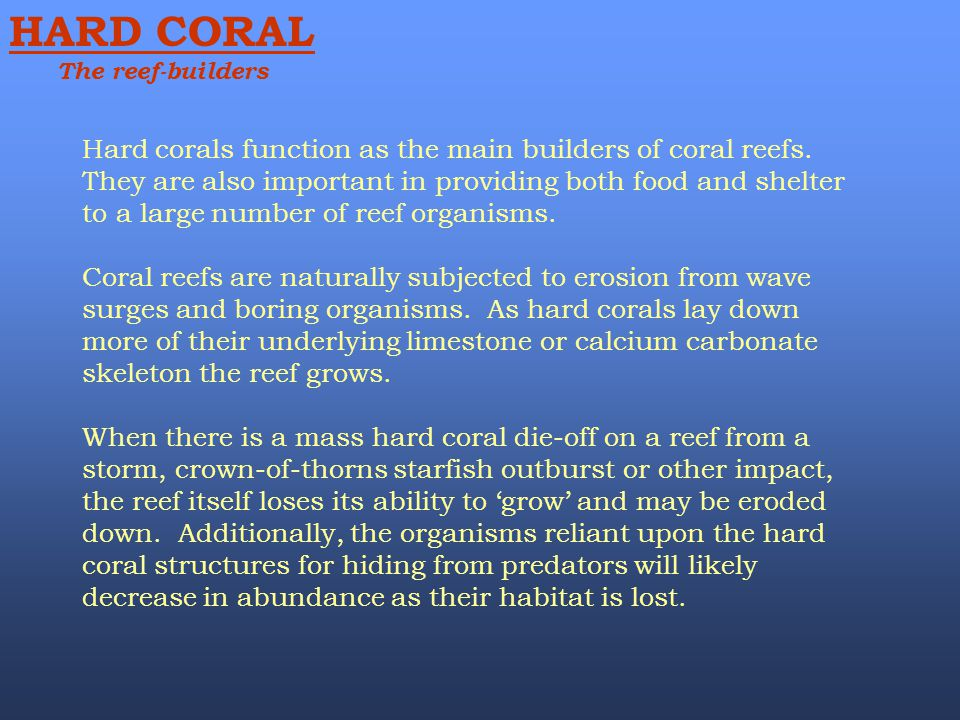 HARD CORAL The reef-builders Hard corals function as the main builders of coral reefs. They are also important in providing both food and shelter to a