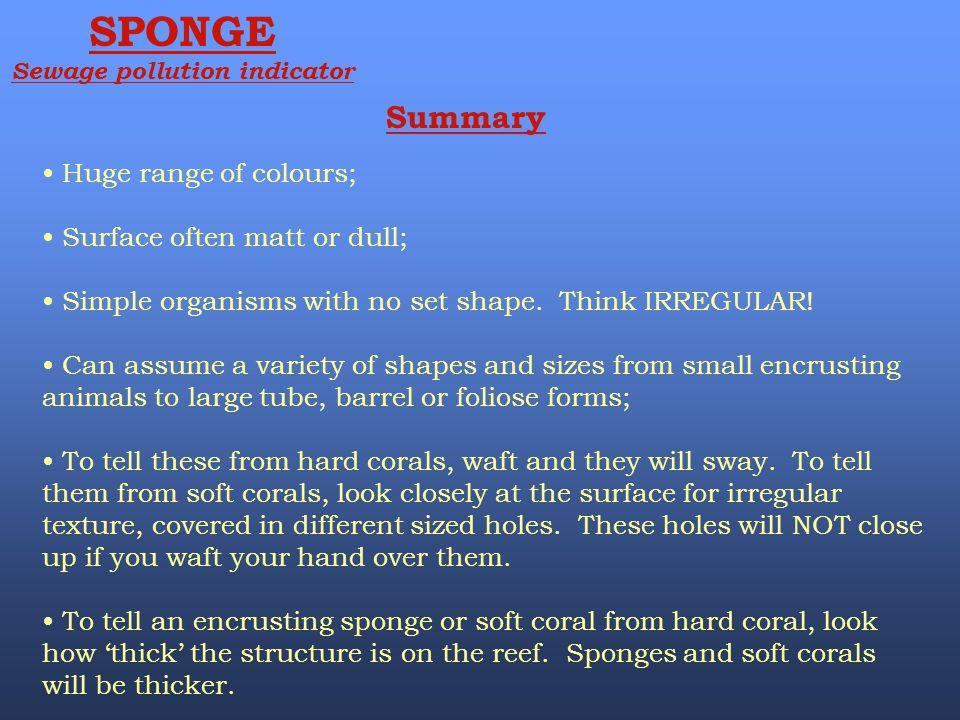 SPONGE Sewage pollution indicator Summary Huge range of colours; Surface often matt or dull; Simple organisms with no set shape. Think IRREGULAR! Can
