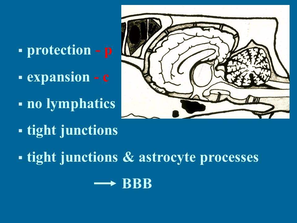  protection - p  expansion - c  no lymphatics  tight junctions  tight junctions & astrocyte processes BBB