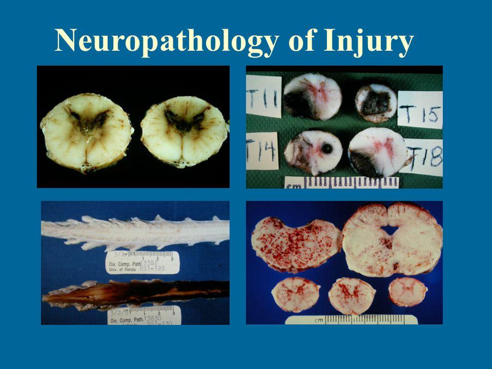 Neuropathology of Injury