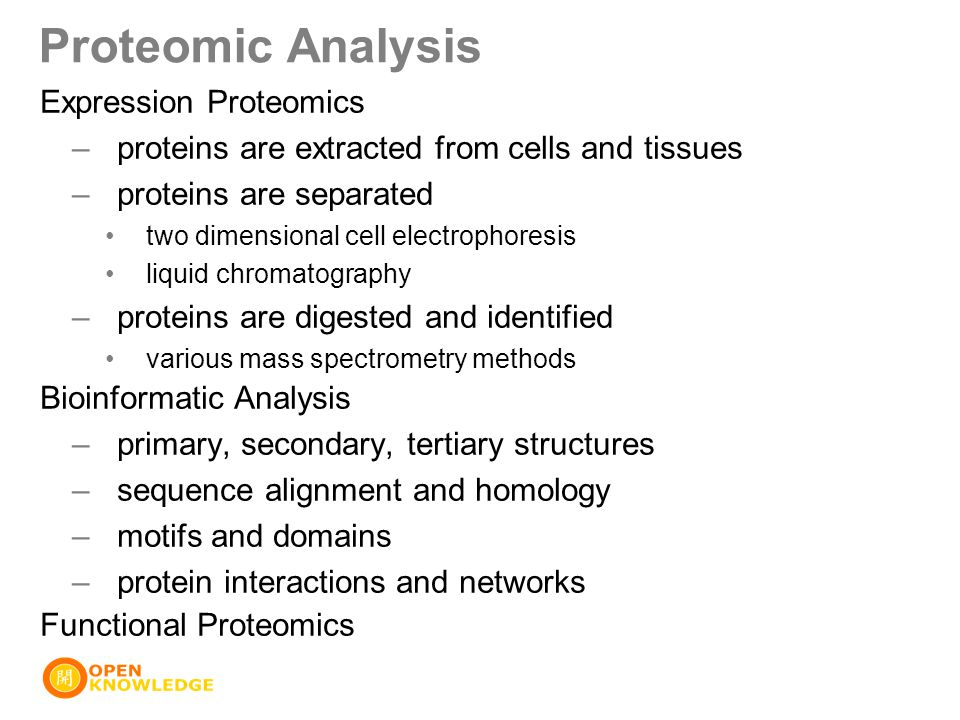 Proteomic Analysis Expression Proteomics –proteins are extracted from cells and tissues –proteins are separated two dimensional cell electrophoresis l