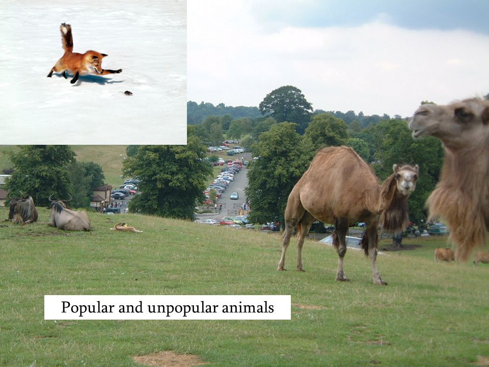 Popular and unpopular animals
