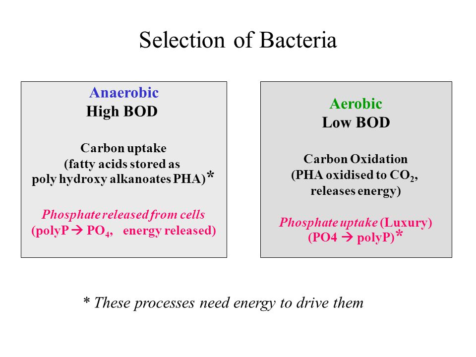 Selection of Bacteria Aerobic Low BOD Carbon Oxidation (PHA oxidised to CO 2, releases energy) Phosphate uptake (Luxury) (PO4  polyP) * Anaerobic High BOD Carbon uptake (fatty acids stored as poly hydroxy alkanoates PHA) * Phosphate released from cells (polyP  PO 4, energy released) * These processes need energy to drive them