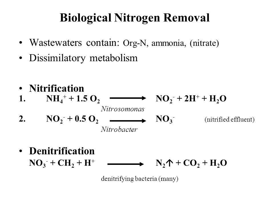 Biological Nitrogen Removal Wastewaters contain: Org-N, ammonia, (nitrate) Dissimilatory metabolism Nitrification 1.NH 4 + + 1.5 O 2 NO 2 - + 2H + + H 2 O Nitrosomonas 2.NO 2 - + 0.5 O 2 NO 3 - (nitrified effluent) Nitrobacter Denitrification NO 3 - + CH 2 + H + N 2  + CO 2 + H 2 O denitrifying bacteria (many)