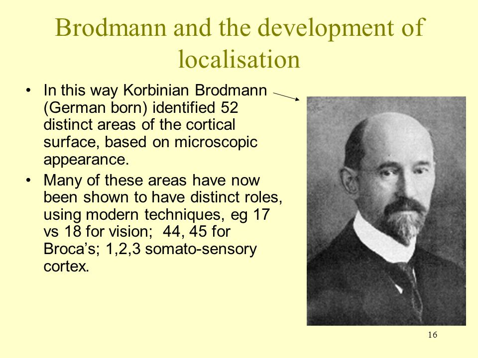 16 Brodmann and the development of localisation In this way Korbinian Brodmann (German born) identified 52 distinct areas of the cortical surface, bas