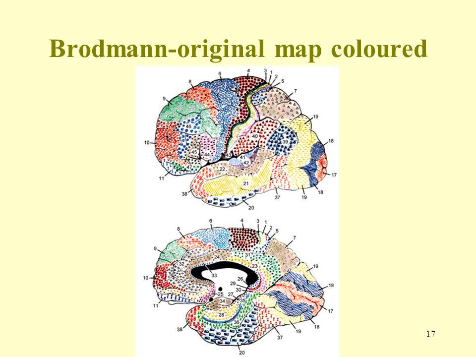 17 Brodmann-original map coloured