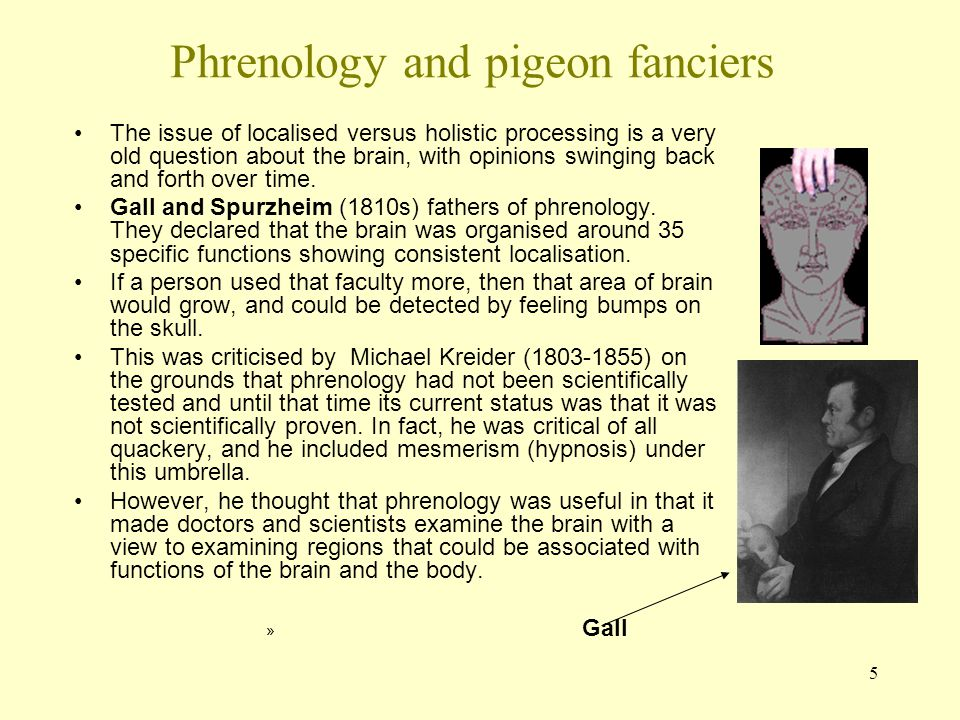 5 Phrenology and pigeon fanciers The issue of localised versus holistic processing is a very old question about the brain, with opinions swinging back