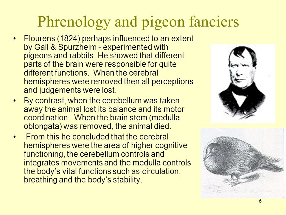 6 Phrenology and pigeon fanciers Flourens (1824) perhaps influenced to an extent by Gall & Spurzheim - experimented with pigeons and rabbits. He showe