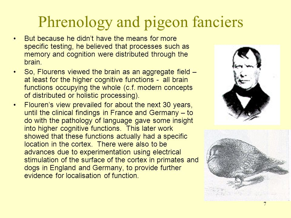 7 Phrenology and pigeon fanciers But because he didn't have the means for more specific testing, he believed that processes such as memory and cogniti