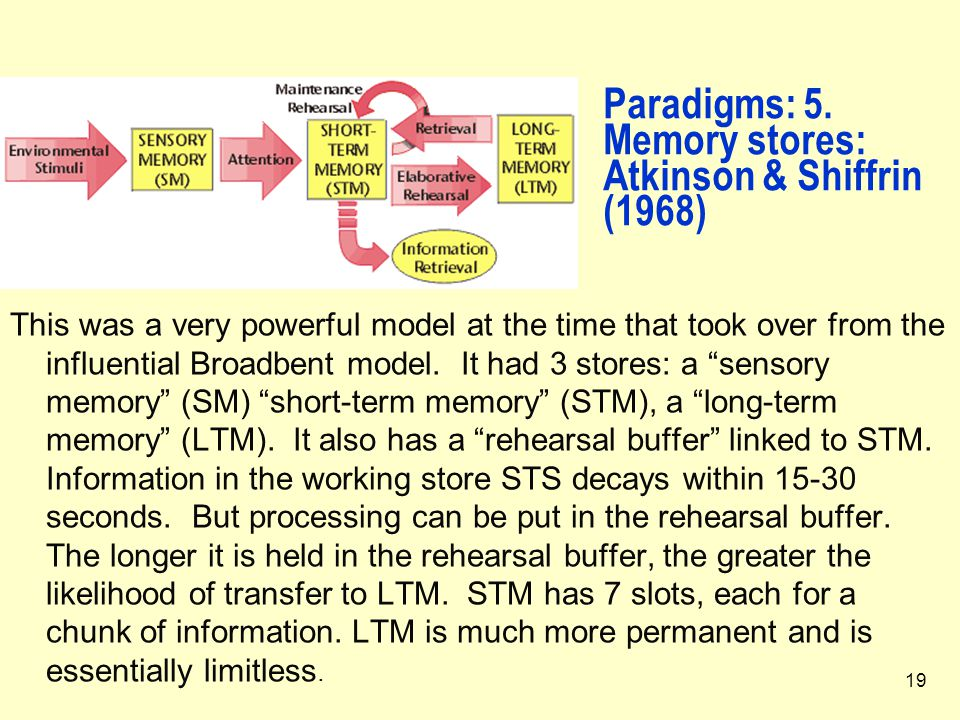 19 Paradigms: 5. Memory stores: Atkinson & Shiffrin (1968) This was a very powerful model at the time that took over from the influential Broadbent mo