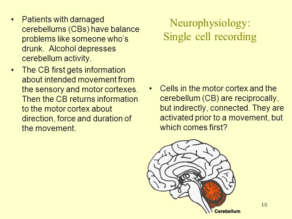 10 Neurophysiology: Single cell recording Patients with damaged cerebellums (CBs) have balance problems like someone who's drunk.