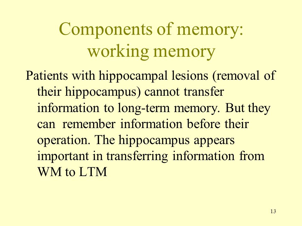 13 Components of memory: working memory Patients with hippocampal lesions (removal of their hippocampus) cannot transfer information to long-term memo