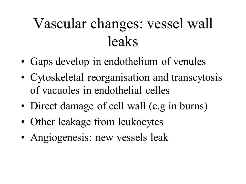 Vascular changes: vessel wall leaks Gaps develop in endothelium of venules Cytoskeletal reorganisation and transcytosis of vacuoles in endothelial cel