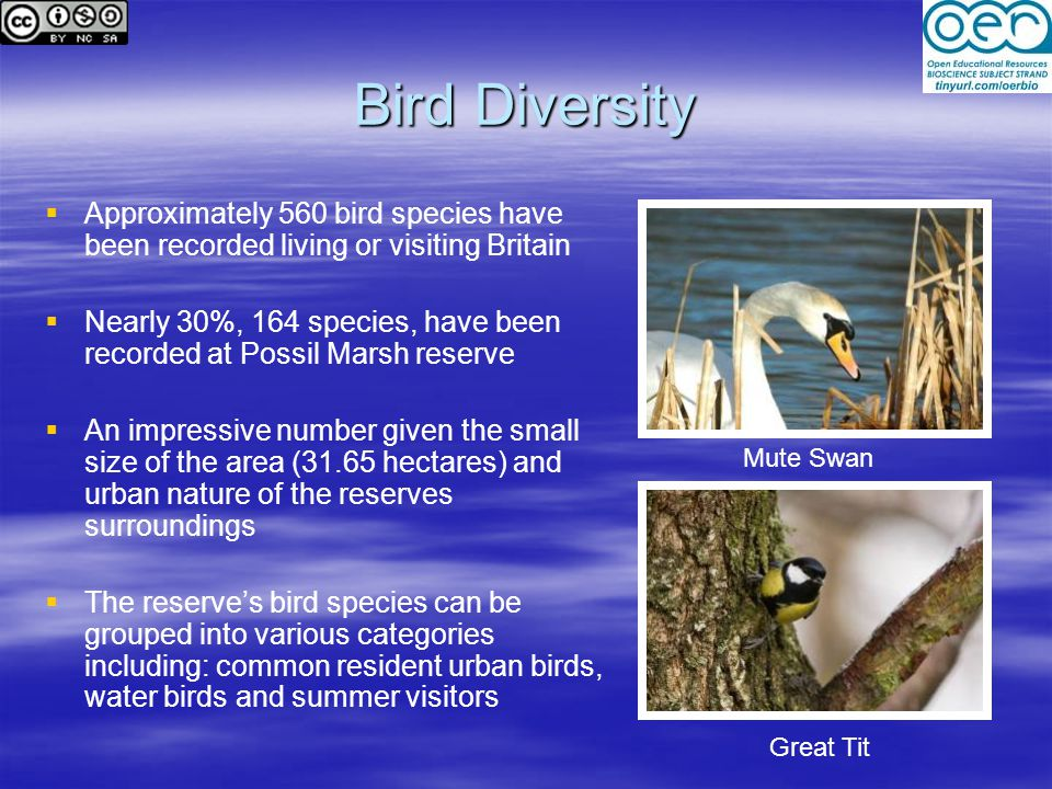 Bird Diversity   Approximately 560 bird species have been recorded living or visiting Britain   Nearly 30%, 164 species, have been recorded at Possil Marsh reserve   An impressive number given the small size of the area (31.65 hectares) and urban nature of the reserves surroundings   The reserve's bird species can be grouped into various categories including: common resident urban birds, water birds and summer visitors Mute Swan Great Tit