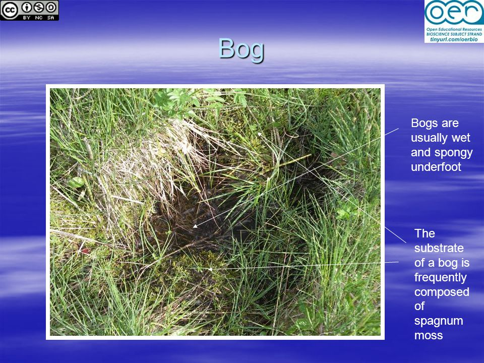 Bog Bogs are usually wet and spongy underfoot The substrate of a bog is frequently composed of spagnum moss