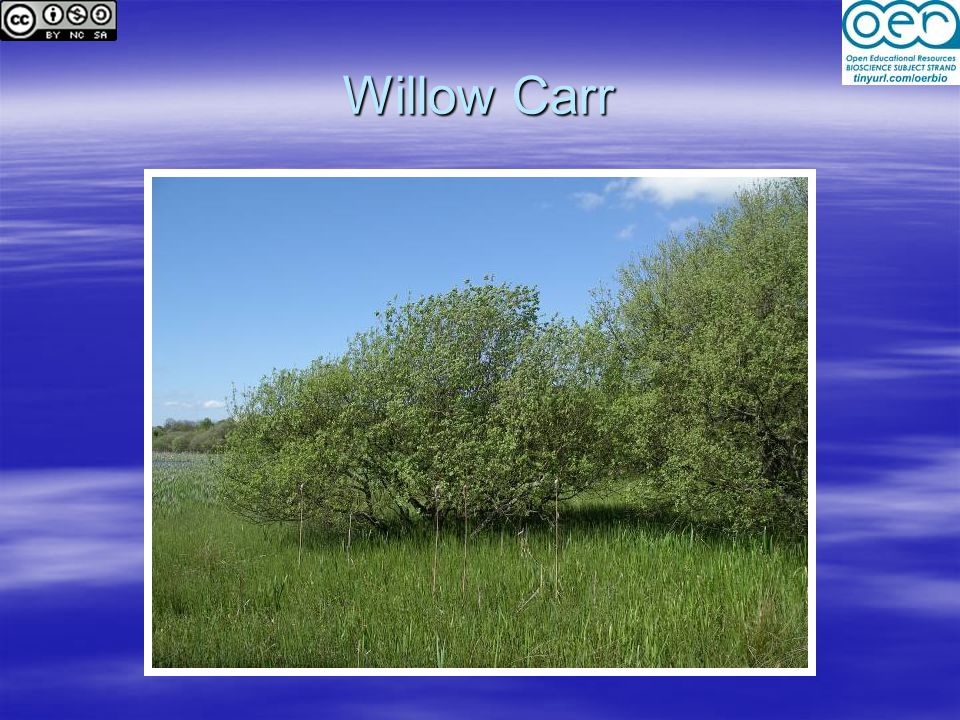 Willow Carr