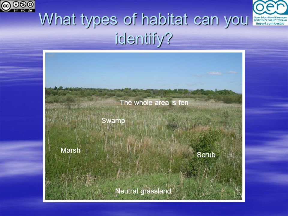 What types of habitat can you identify Swamp Marsh Neutral grassland Scrub The whole area is fen