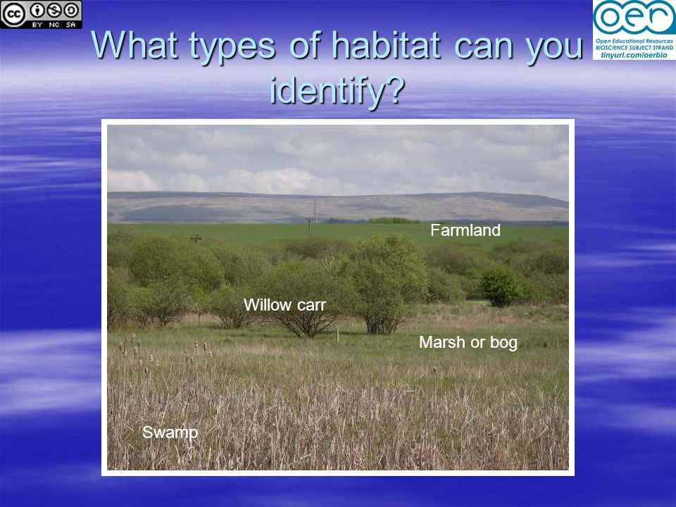 What types of habitat can you identify? Swamp Marsh or bog Willow carr Farmland